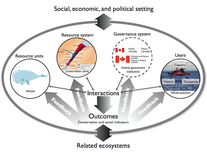 figure5 fig 5 conceptual diagram of the social ecological system of whale