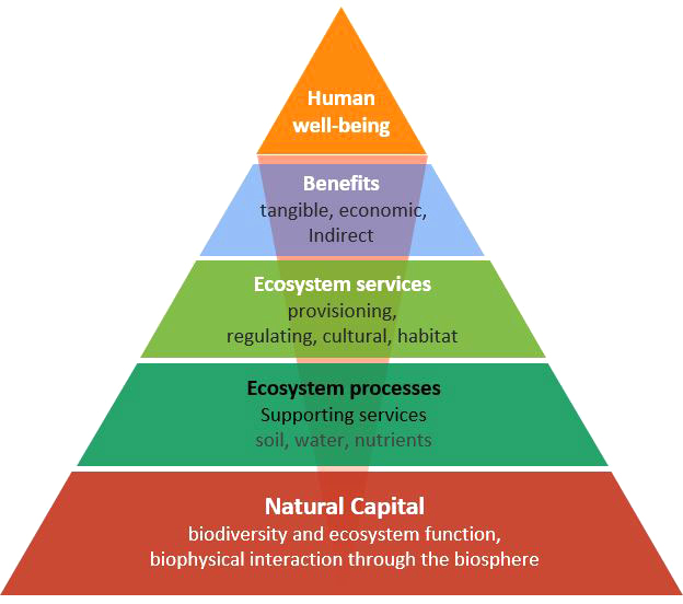 Fig 1 This pyramid shows how human wellbeing depends