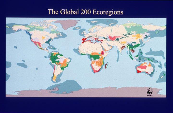 Conservation Ecology: Appraising Adaptive Management: Fig. 1